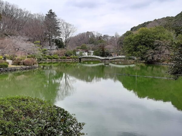 「薬師池公園」の薬師池