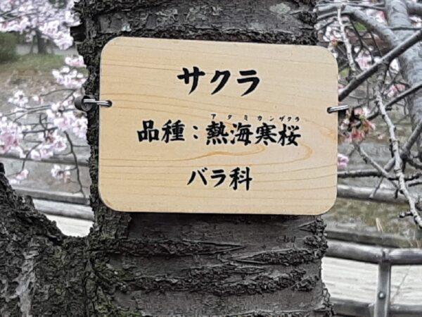 熱海寒桜の看板