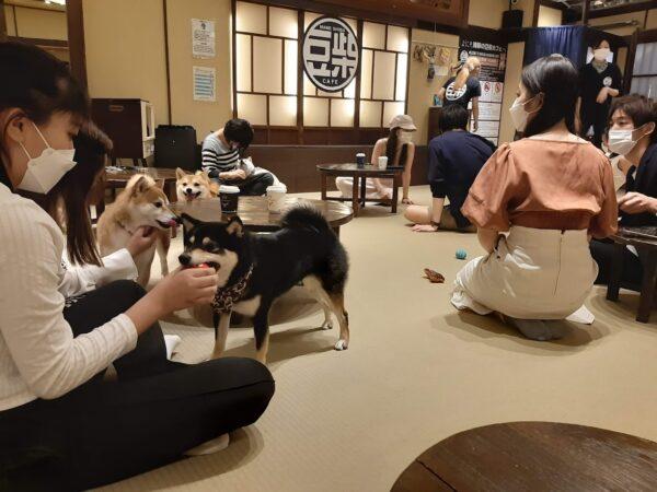 浅草の豆柴カフェ